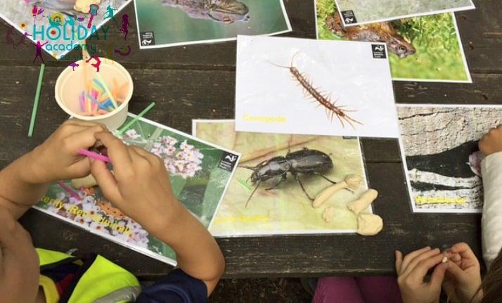 Children's forest day trips